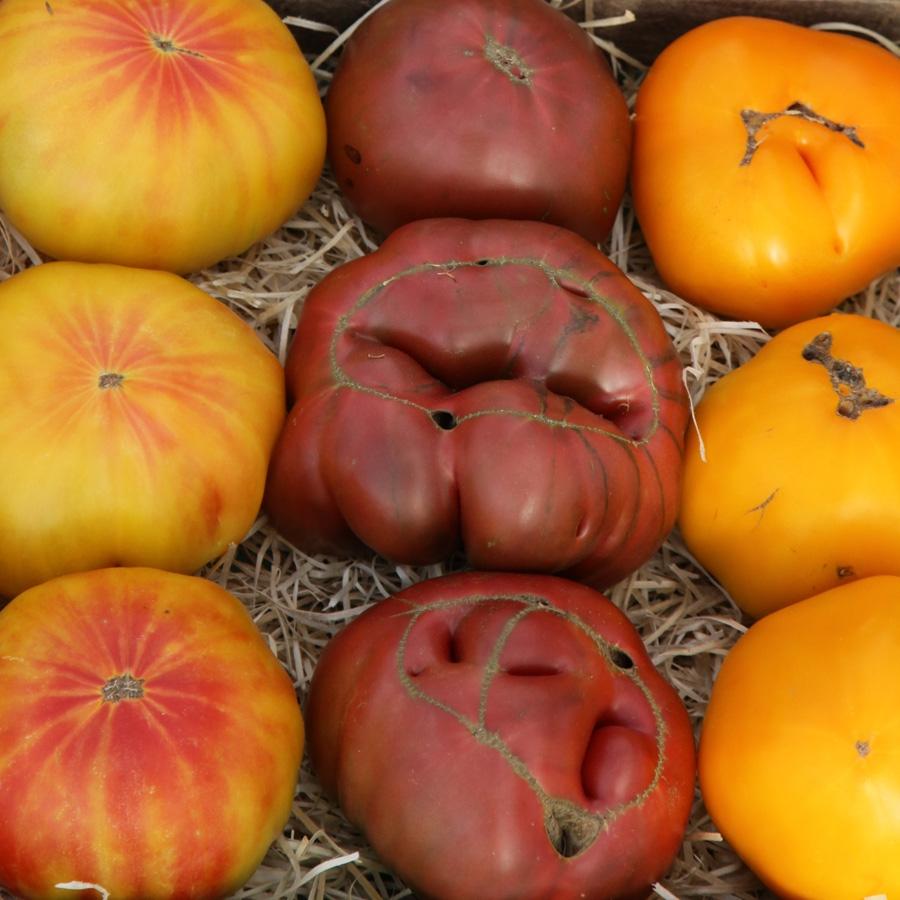 Tomatenraritäten<span>Tomaten</span>