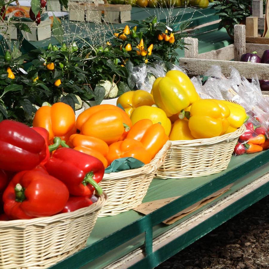 Paprika<span>Gemüse & Co</span>